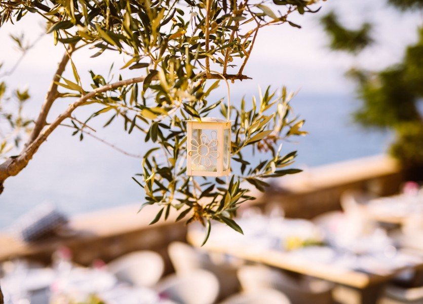 Olive tree wedding in Greece